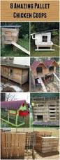 18732 best chicken coops images on pinterest backyard chickens