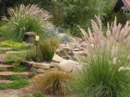 drought tolerant landscaping gardengates gardening and
