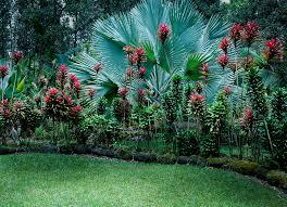 tropicalplants and trees com plants amazing tropical scenery