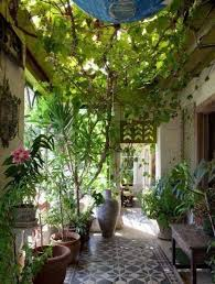 eye catching indoor climbing plants