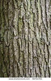 tree trunk stock photo 56754784