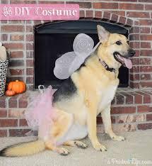 Lab Halloween Costume Ideas Fairy Princess Costume For Your Dog U0026 80 More Costume Ideas