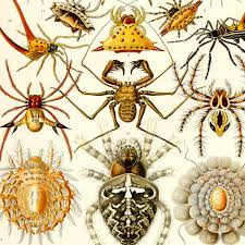 halloween background for poster for physician with green halloween art spider print spider art poster ernst haeckel