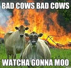 Moo Meme - moo pun meme by andrig92 memedroid