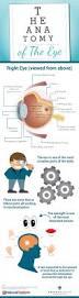 Anatomy Of The Eye The Anatomy Of The Eye Visual Ly