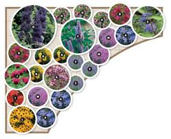 15 best designing butterfly garden butterfly garden design gardens