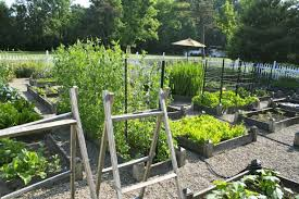 fall vegetables garden ideas great home vegetable garden ideas