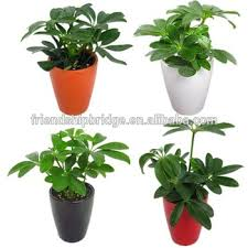 evergreen foliage outdoor landscaping decorative ornamental plants