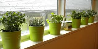 Window Sill Herb Garden Designs Awesome Window Sill Garden Designs With Creating A Window Sill