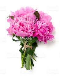 The Pink Peonies by Bunch Of Pink Peonies Isolated On White Background Stock Photo