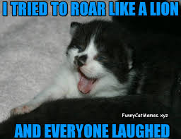 Funny White Memes - the kitten tried to roar like a lion funny kitten meme