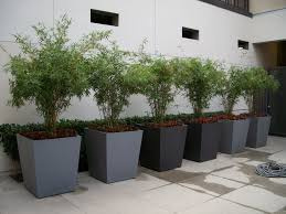 large patio planters for trees home design planning gallery at