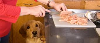 10 healthy homemade dog food recipes and organic treats