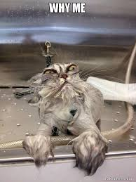 Why Me Meme - why me cat bath returns make a meme