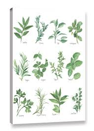 herb chart gracie oaks herb chart graphic art on wrapped canvas in white