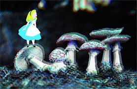 alice in wonderland images alice in wonderland wallpaper and