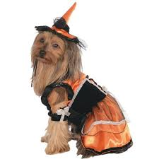 Halloween Costumes Small Dogs 25 Small Dog Costumes Ideas Wiener Dogs