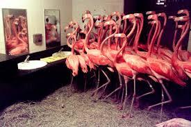 Flamingo Bathroom Flamingos In The Men U0027s Room How Zoos And Aquariums Handle