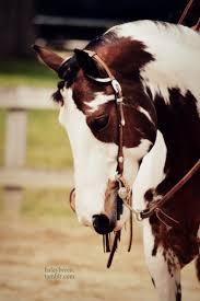ferrari horse vs mustang horse 290 best horses horses horses images on pinterest showmanship