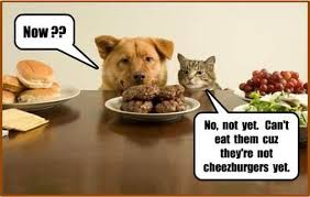 Dog And Cat Memes - pets animal photos dogs and cats amazing memes