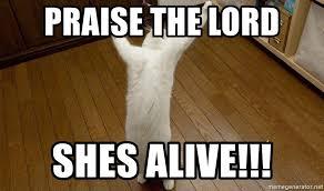 Praise The Lord Meme - praise the lord shes alive praise the lord cat meme generator