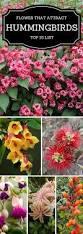 Flower Garden App by Top 10 Pretty Plants That Attract Hummingbirds Hummingbird