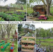 native plants of pennsylvania herbal springs farmstead ephrata pa greenhouse native plants herbs