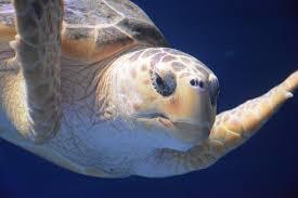 5 weirdest sea creatures you u0027ll see at the birch aquarium la jolla