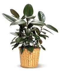 flower house plants u0026 fruit baskets delivery