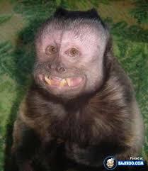 Baby Monkey Meme - 21 pictures of ugly monkeys bajiroo com