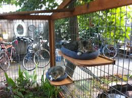 cat enclosures rah construction and custom furniture