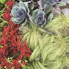 small ornamental grasses costa farms