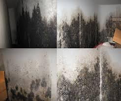 damp basement wall paint basement gallery