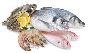 pesci alimentazione pesce istruzioni per l uso alimentazione