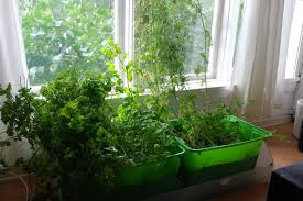 Herb Window Box Indoor Indoor Herb Garden With Automatic Watering 8 Steps With Pictures