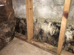 mold removal and remediation angie u0027s list