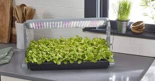what is the best lighting for growing indoor the 8 best indoor grow lights for your houseplants purewow