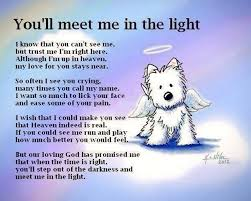 grieving the loss of a pet you ll meet me in the light jpg 601 480 wishes qoutes
