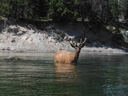 Wyoming wildlife tours images Yellowstone kayak tours jackson hole kayak tours grand teton jpg