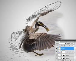 half sketch half photo morph with photoshop tipsquirrel
