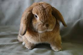 thinking about adopting a bunny this easter here u0027s what you need