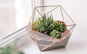 planter for succulents succulent planter ideas 15 unique and creative succulent planter