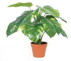 aliexpress buy wholesale 13 leaves pcs scindapsus aureus