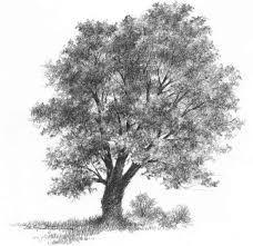 pictures pencil sketch of a tree drawing art gallery