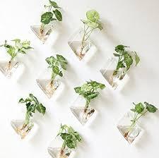 Hanging Indoor Planter by Indoor Hanging Plants Amazon Com