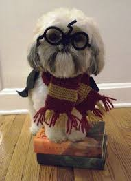 Dogs Halloween Costumes Pictures Dog Halloween Costumes 2012 Harry Potter Tom Dwyer Automotivetom