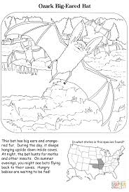 ozark big eared bat coloring page free printable coloring pages