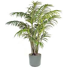 interpretation of a dream in which you saw palm