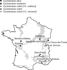 Dijon France Map by A Revision Of The Rare Genus Cyclolampas Echinoidea Using