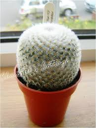 1 evergreen mini ornamental indoor cactus plant in pot ebay